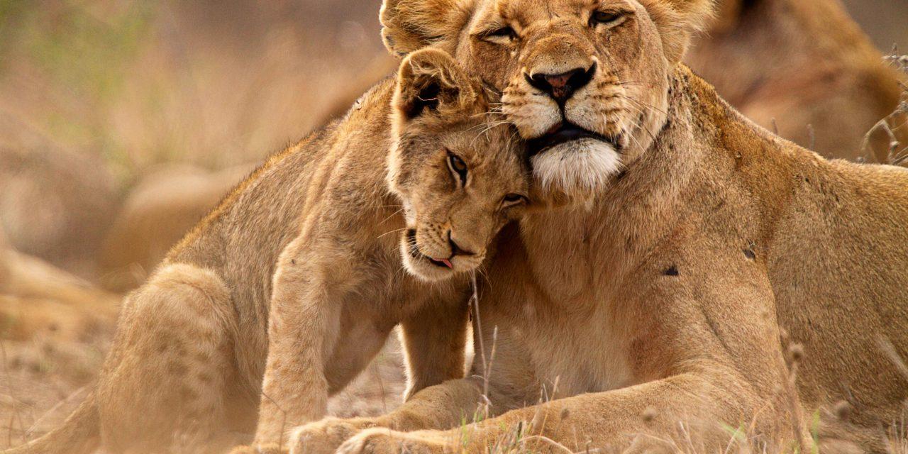 https://bsl.com.mt/wp-content/uploads/2019/03/shutterstock_1078246298-Kruger-National-Park-1280x640.jpg